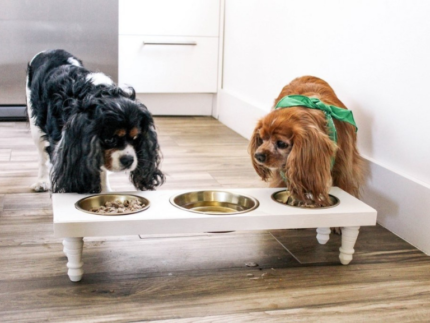 How to Create a DIY Dog Station